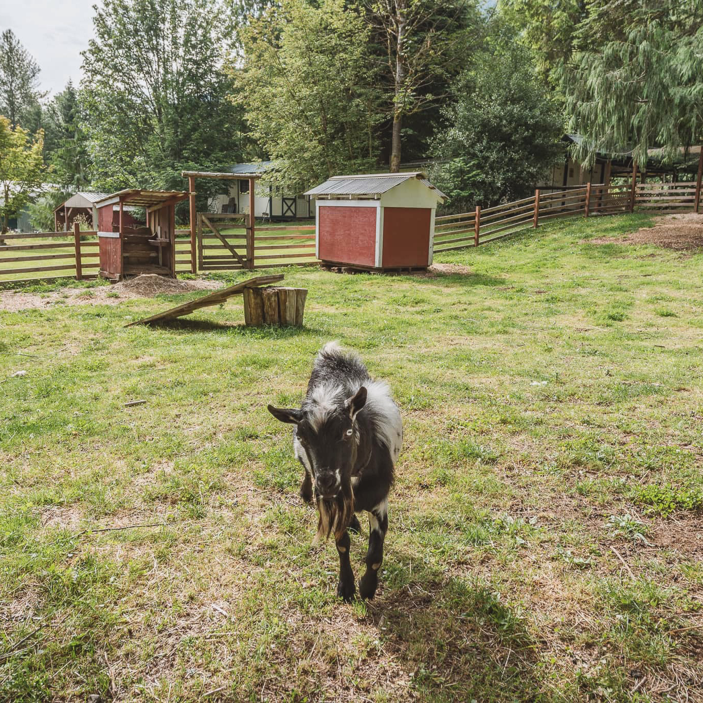 Emerald Valley Inn - Small Farm with Sparky the Goat